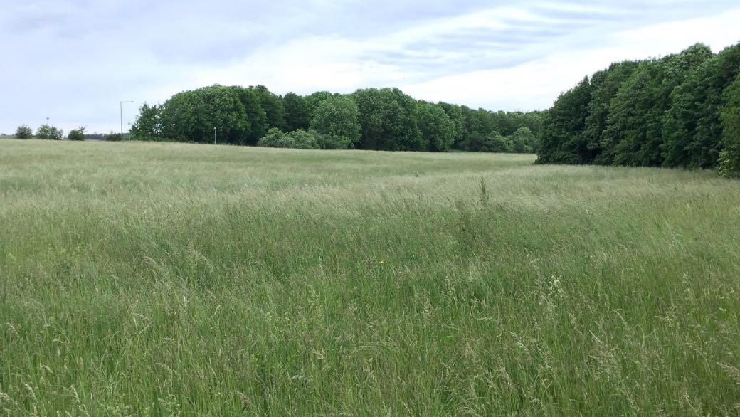 Ängsmark vid Karstorp i Lomma.
