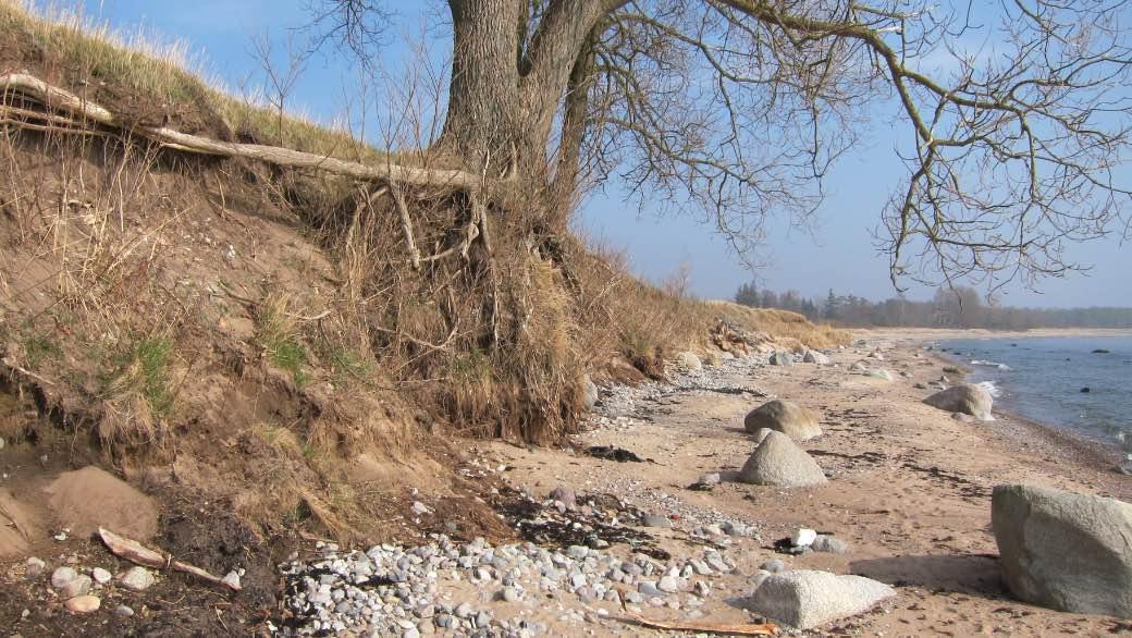 Erosion vid strandkanten vid Lilleskog i Ystads kommun.